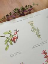 Obrazy - Plagát : Rastlinky v suchom prostredí - 13010883_