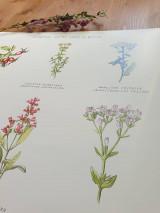 Obrazy - Plagát : Rastlinky v suchom prostredí - 13010884_