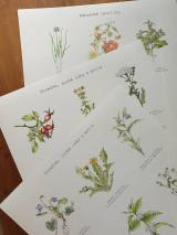Obrazy - Plagát : Rastlinky v suchom prostredí - 13010886_