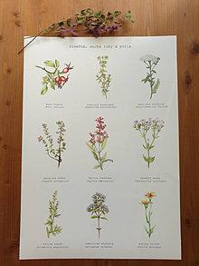 Obrazy - Plagát : Rastlinky v suchom prostredí - 13010885_