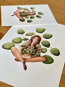 Grafika - Sama s pileou - Print | Botanická ilustrácia - 13017900_
