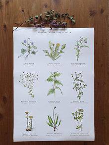Papiernictvo - Plagát : Rastlinky vo vlhkom prostredí - 13023228_