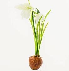 Iný materiál - umelý kvet-snežienka s cibuľkou 25cm - 13097102_