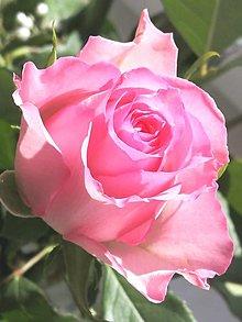 """Fotografie - Fotografia """"Kráľovná kvetín"""" - 13095311_"""