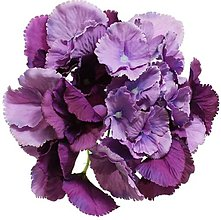 Iný materiál - umelý kvet-hlavička hydrangea 16cm (Fialová) - 13105517_