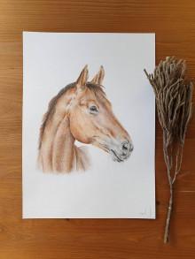 Obrazy - Kresba-kôň A4 - 13107594_