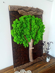 Obrázky - starý strom - 13112998_