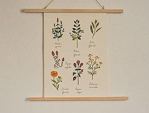 Grafika - Print A3 - Bylinky - 13171728_