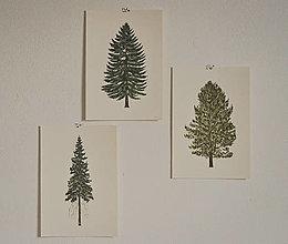 Grafika - Set ihličnatých stromov - 3ks - 13171744_