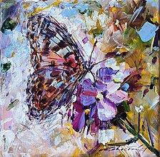 Obrazy - Motýľ a kvietok - 13184112_