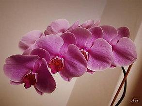 Fotografie - Orchidea - 13203024_