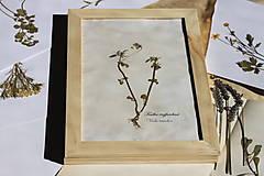 Dekorácie - Botanický herbár liečivých bylín Fialka trojfarebná - 13203922_