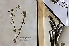 Dekorácie - Botanický herbár liečivých bylín Fialka trojfarebná - 13203924_