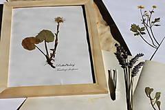 Obrazy - Vintage obraz Botanický herbár Podbeľ liečivý - 13203944_