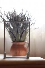 Obrazy - Levanduľa lekárska Lavandula angustifolia Minimalizmus - 13204202_
