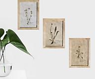 Obrázky - Tri vintage obrazy z herbáru podľa vlastného výberu - 13226014_