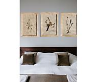 Obrázky - Tri vintage obrazy z herbáru podľa vlastného výberu - 13226802_