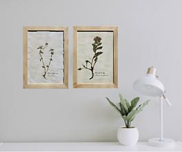 Dekorácie - Botanický herbár liečivých bylín Fialka trojfarebná - 13227098_