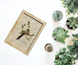 Detské doplnky - Vintage Botanický herbár liečivých bylín Obraz Alchemilka žltozelená - 13227116_