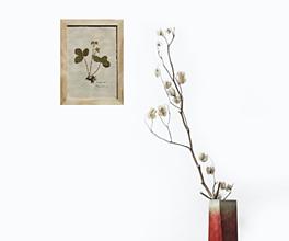Obrazy - Herbár liečivých rastlín Jahoda lesná - 13227175_