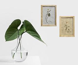 Obrazy - Retro /vintage/ obraz Botanický herbár Iskerník plazivý - 13227192_