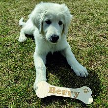 Tabuľky - Menovka - kosť pre psíka - 13272624_