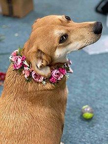 Pre zvieratká - Kvetinový obojok... na želanie - 13277661_