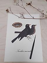 Obrazy - Obrázok - vtáčik - 13282385_