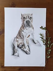 Kresby - Kresba zvieraťa : Na želanie - 13281577_
