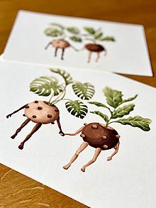 Grafika - Nerozlučná dvojka - Print | Botanická ilustrácia - 13301642_