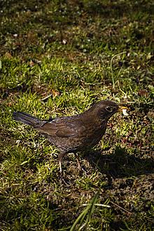 Fotografie - Vtáčí apetít - 13310673_