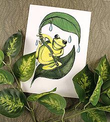 Kresby - Art Print žabiak - 13315181_