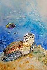 Obrazy - Akvarelová maľba-korytnačka - 13319156_