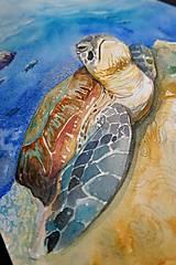 Obrazy - Akvarelová maľba-korytnačka - 13319159_