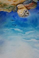 Obrazy - Akvarelová maľba-korytnačka - 13319161_