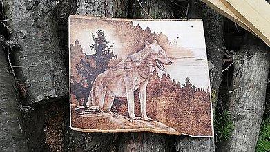 Obrazy - Vlk v lese - 13341794_
