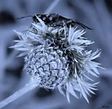Fotografie - Blue effect - 13346035_