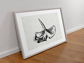 Grafika - Art Print-Paleontológia-Triceratops - 13368370_