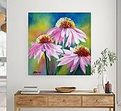 Obrazy - Echinacea 50x50 - 13377062_