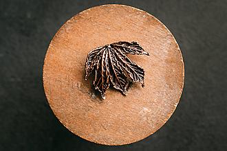 Odznaky/Brošne - Brošňa pagaštan konský I. - 13425103_