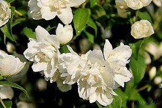 Fotografie - Fotografia - Vôňa kvetov ... - 13442253_