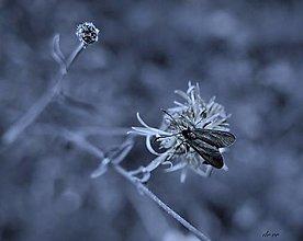 Fotografie - Blue - 13456114_