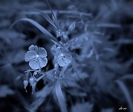 Fotografie - Do belasa - 13456122_