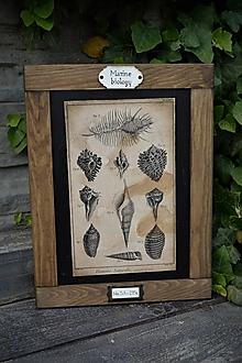 Tabuľky - Obrázok zo starého kabinetu - morská biológia (Mušle) - 13470692_