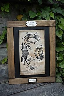 Tabuľky - Obrázok zo starého kabinetu - morská biológia (kraby) - 13470696_