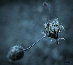 Fotografie - Na lúke - 13475484_