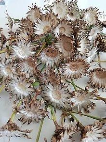 Suroviny - Sušené kvety - kvetné lôžka - 13498373_