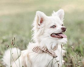Pre zvieratá - Hnedá károvaná pre psíka. - 13554500_