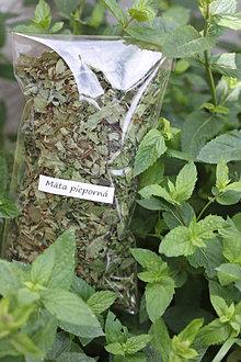 Potraviny - Mäta pieporná Bio sypaný čaj 20 g - 13575663_