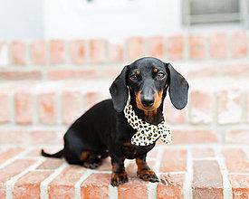 Pre zvieratá - Mašlička pre psíka - Leopard - 13579556_
